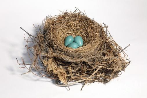 3-robins-nest-with-eggs-ted-kinsman